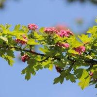Цветочный хоровод-613. :: Руслан Грицунь