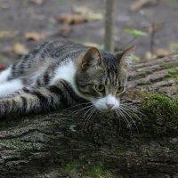 Лесной охотник :: Ната Волга