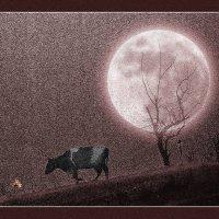 Лунная ночь :: Владимир Дядьков