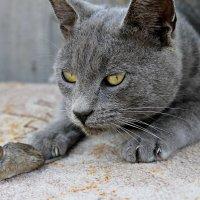 Cat :: Albina Aidinowa