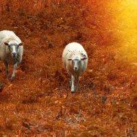 оранжевый ковер с овечками.))) :: Ирэна Мазакина