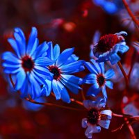 Синие цветы :: Любовь Чунарёва