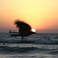 И тут вылетает птичка :: Fiodor