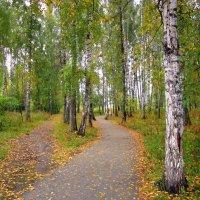 Осень - расцвет красоты природы . :: Мила Бовкун