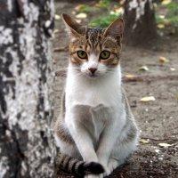Котенок с нашего двора :: Александр Попов