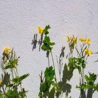 Цветы у храмовой ограды :: Grey Bishop