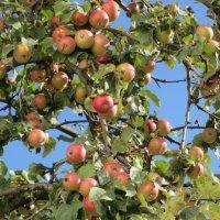 Осенний урожай :: valeriy khlopunov