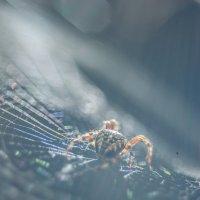 Arachnophobia :: Александр Мирошниченко