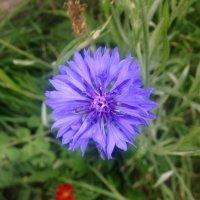 Последние цветочки :: Светлана Ященко