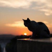 Кот, который гуляет сам по себе... :: Vladimir 070549