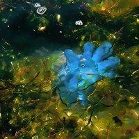 Цветы моря (черноморская медуза) :: Наталья Костенко