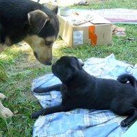 знакомство горожанки с деревенским псом :: Александр Прокудин