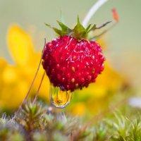 Сладка-ягода :: Надежда Келембет