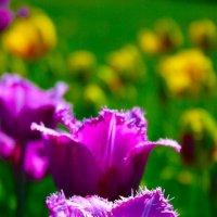 Цветок в саду :: Evgen Polyakov