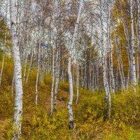 осень золотая :: Сергей Сол