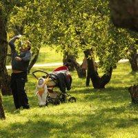 Вот так  я висю, а папка  яблоки  сбивает. :: Наталья Соколова