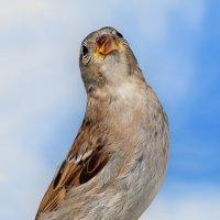 важный птиц :: linnud