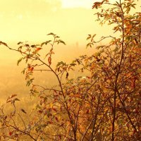ягоды и туман :: Александра