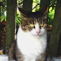 Монастырский кот :: Владимир Бровко
