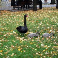 Мама с детьми :: Nastasia Nikitina