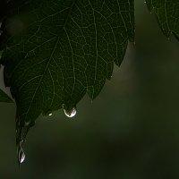 И снова дождь. :: Анатолий. Chesnavik.