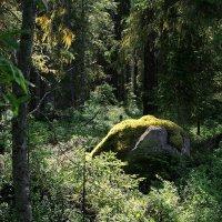 Как да во лесу дремучем... :: Александр Буланов