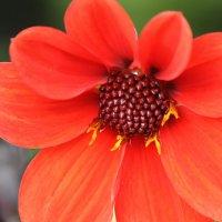 краски Осени :: mirtine