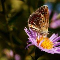 бабочка :: валентин яблонский