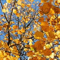 Осенние краски :: Марина Жилякова