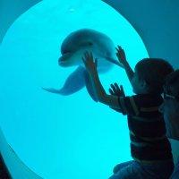 В дельфинарии :: Александр Цисарь