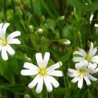 цветы :: ОКСАНА ШВЕЦ