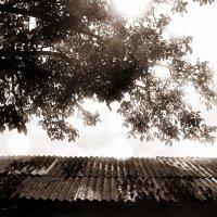 Чистое небо :: Катерина Чебышева