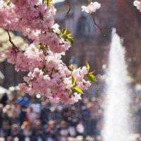 Весной в Стокгольме :: Swetlana V