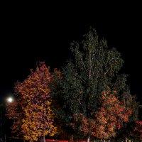 Цвет ночнной осени :: Виктор Зенин