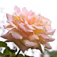 Последние цветы ушедшего лета... :: Наталья Костенко