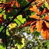 Осенние краски :: Владимир Бровко