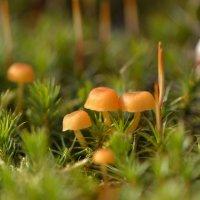 Опять грибочки... :: Mc!! .....