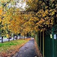 Осень :: Александр Чеботарев