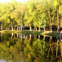 Золотая осень в отражение. :: Елена Семигина