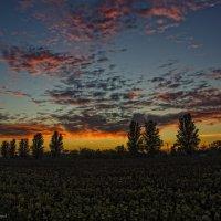 А вы сталкивались с тем, что красоту заката невозможно описать словами? :: Ксения Довгопол