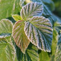 Утренние заморозки :: Вера Андреева