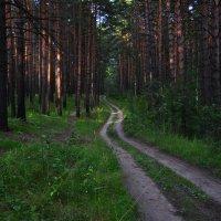 Вечерний лес :: Алексей http://fotokto.ru/id148151Морозов