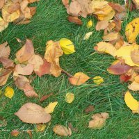 Осенний ковёр :: °•●Елена●•° Аникина♀
