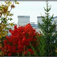 Осенний пейзаж из окна... :: Fededuard Винтанюк