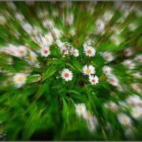 Осенние цветы :: Fededuard Винтанюк
