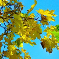 Осень... :: Анатолий Антонов