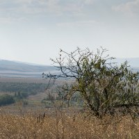 Крым. Дерево на фоне гор :: Николай Ефремов