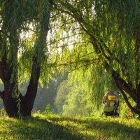 Ивы залитые солнцем :: Андрей Лукьянов
