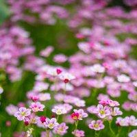 ковер из цветов :: Мария Корнилова