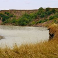 Берега реки Кубань :: Игорь Сикорский
